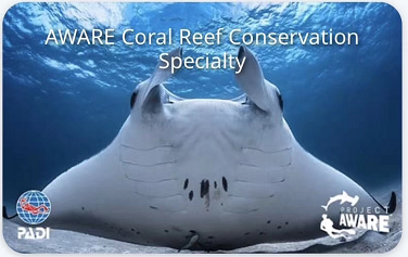 Aware coral reef conservation card