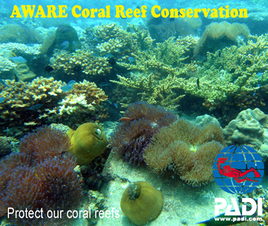PADI-AWARE-Coral-Reef-Conservation-Specialty-Scuba-Nation-Cambodia